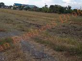 Freehold Land (53.5 Rai) In Pathum Thani For Sale